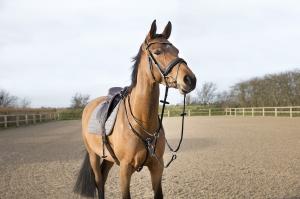 5da17d0832b5f Musli Producent: Brandon, Pro-linen - Horse Tack