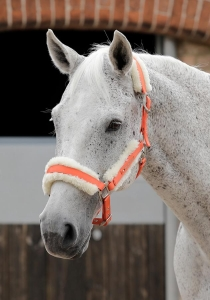 "Kantar PREMIER EQUINE ""Techno Wool"" orange"