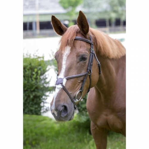 norton-luxe-fancy-bridle.jpg